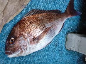 Photo: やりました!真鯛キャッチ。