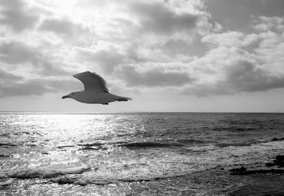 Freedom. di micphotography