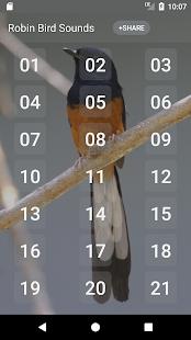 Robin bird sound - call and song - náhled