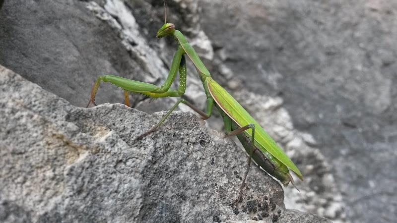 GreenAlien di Laucol