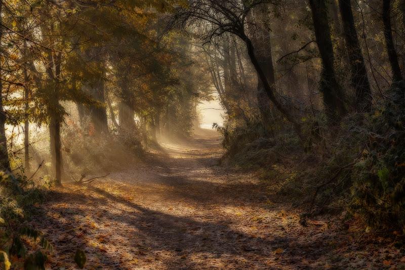 sentiero nel bosco incantato di angart71