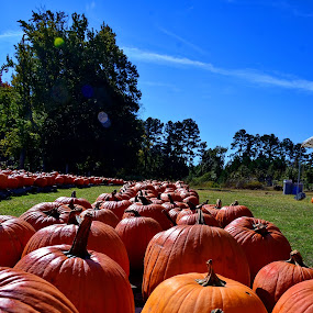 Pumpkins in Cary by John Anthony - Nature Up Close Gardens & Produce ( pumpkins, raleigh, cary, north carolina )