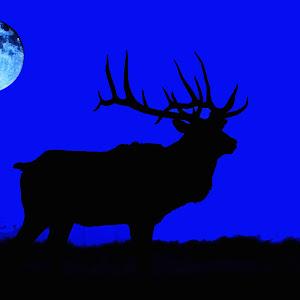 Elk (1).jpg