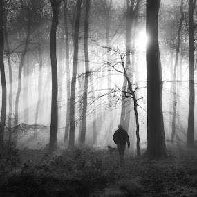 Walking the Dog by Ceri Jones - Landscapes Forests ( winter, trees, forest, dog, woods, walk, rays, sun, , black and white, b&w, landscape )