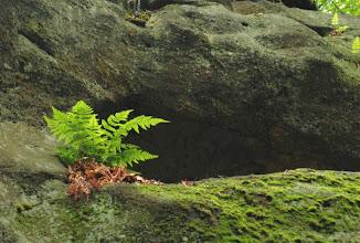 Photo: nawet na skale może pojawić się życie