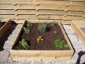 Photo: Herb raised Beds