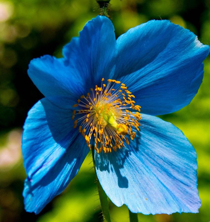 by Randy Sampson - Flowers Single Flower