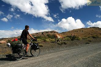 Photo: Путешествуя по Южной Америке быстро привыкаешь к природным условиям. Ведь в некоторых местам ламы – это дружелюбные, безбоязненные, южноамериканские верблюды – встречаются значительно чаще, чем люди. Часто встречаются нанду – пугливые страусы, а порой скунсы, броненосцы и кондоры.  Место съемки: Патагония, Южная Америка Поездка: велоэкспедиция по Южной Америке Автор: Мария Завирюхина