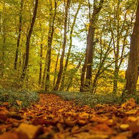 Go by Krešimir Šarčević - Landscapes Forests