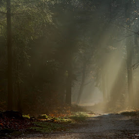 spooky by Hilda van der Lee - Landscapes Forests ( winter, nature, forest, light, early morning,  )