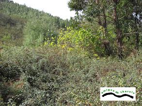 Photo: Los árboles frutales atrapados por las zarzas.