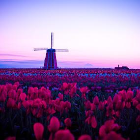Windmill by Ivan Johnson - Landscapes Sunsets & Sunrises (  )