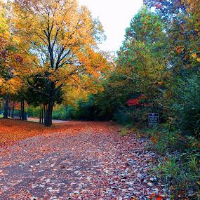by Josh Pingel - City,  Street & Park  City Parks