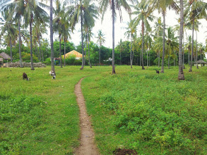 Photo: field path