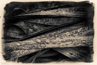 Photo: WINTER REED ...  its still raining  mit Kummer kann man allein fertig werden, aber um sich aus vollem herzen freuen zu können, muss man die freude teilen.    - mark twain -  noire-10012012  #allthingsmonochrome  with thanks to +Charles Lupica+Bill Wood+All Things Monochrome                             #fotoamateur  by +Britta Rogge+Remo Primatesta +Karsten Meyer+Markus Landsmann+Scotti van Palm+Fotoamateur #breakfastclub  by +Gemma Costa+Breakfast Club #dailydepthoffield  by +Vince Ong+Nuraini Ghaifullah+Virgil Cowen+f.a. fiebig+Daily Depth Of Field #creative366project  by +Takahiro Yamamoto+Jeff Matsuya+Creative 366 Project #1000photographersbwmonochrome  by +Robert SKREINER+Nikola Nikolski+10000 Photographers BW Monochrome #hqspmonochrome  by +Blake Harrold+Rinus Bakker+Bakker Rinus+Luis Vivanco+HQSP Monochrome+BW DIGITAL PHOTOGRAPHY CLASSIC STYLE #swdpcl by +peter paul müller #givemeyourbestshot  by +Gene Bowker+Tisha Craw+lane langmade+Brad Buckmaster #pixelworld +PixelWorld #monochrome52  #monochromephotography  #monochrome  #PlusPhotoExtract  by +Jarek Klimek #blackandwhitephotography  #blackandwhite #EuropeanPhotography +European Photo +Janusz Brakoniecki +Jean-Louis LAURENCE +Manuella Betaille +Michael Muraz +Susanne Ramharter +CircleCount+Amazing Sharings ►+1000+ & Petit Chef D'Oeuvre by +Paul Paradis