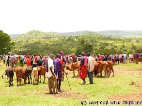 Photo: Maasajsky zvířecí trh / Maasai animal market