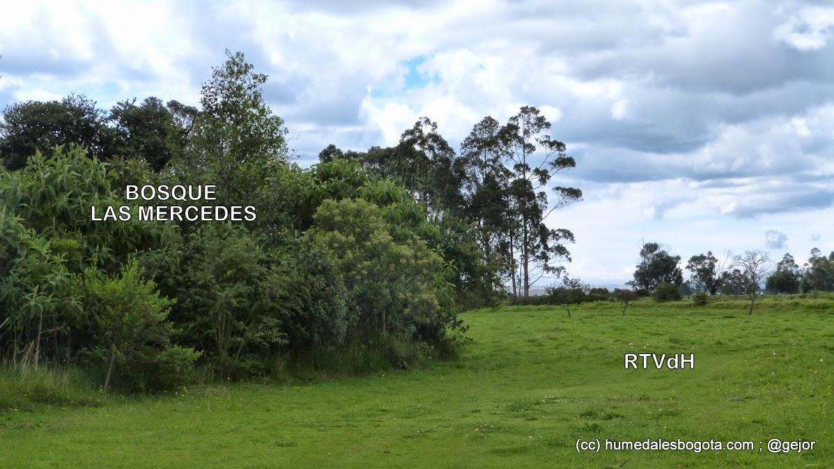 Bosque de Las Mercedes vecino a la Reserva Thomas Van der Hammen