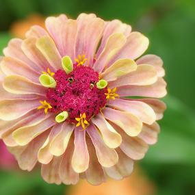 by Lori Rose - Flowers Single Flower ( flower,  )