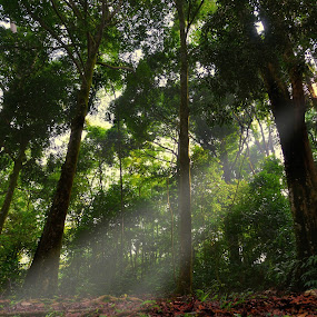 Tropical rain forest by Zam Foto - Landscapes Forests ( ray, wood, jungle, green, tropical, forest, light, sun )