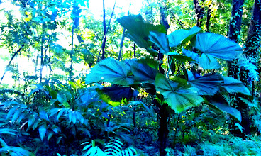 Photo: Those giant leaves seem to be reaching out.