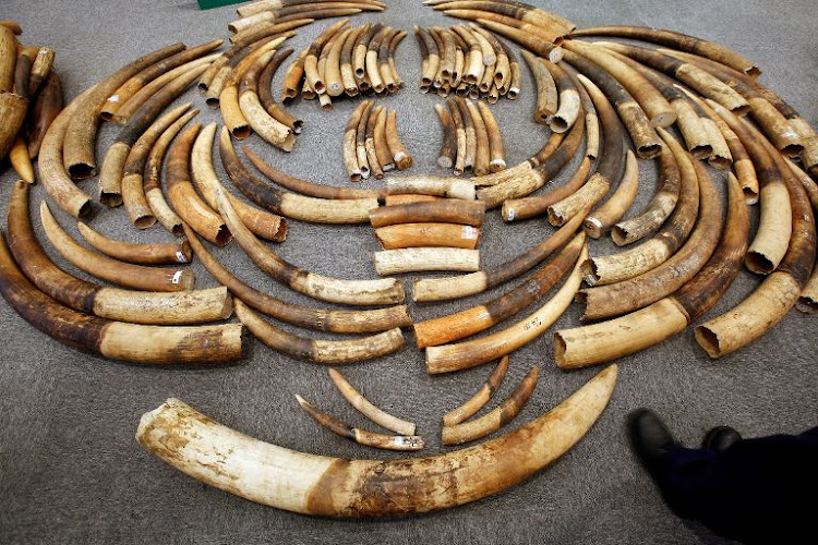 Sifiso Mpofu and two other suspects were found moving the tusks from a car. File photo.