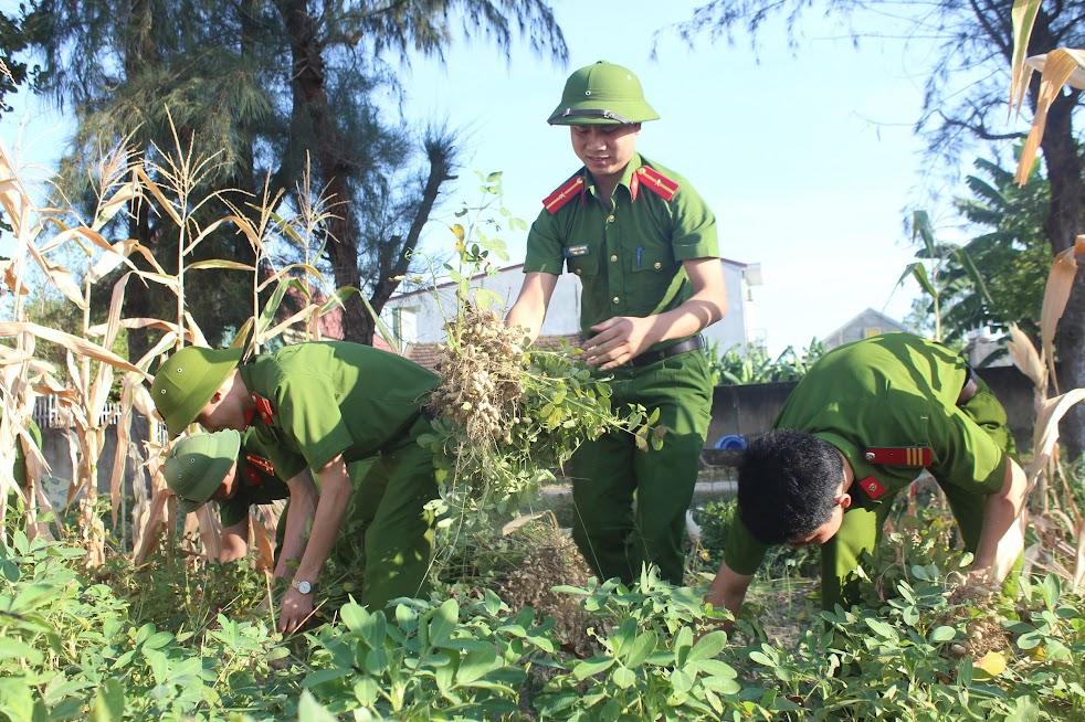 """Tăng cường bám địa bàn """"3 cùng"""" với nhân dân (Trong ảnh: Đoàn viên, thanh niên Công an Nghệ An giúp dân thu hoạch lạc)"""
