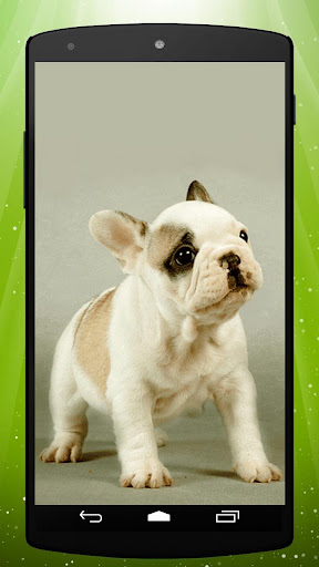Bulldog Puppy Live Wallpaper