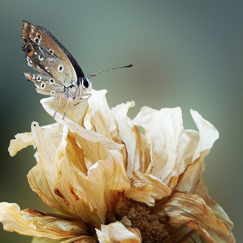 Quanto potrà volare in alto con le ali spezzate di _Chiara_