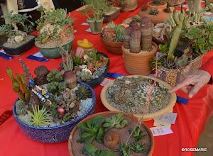 Photo: Dish gardens -mixed pots