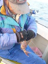 Photo: イノウエさんもバンバン釣ってます!