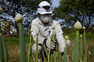 Photo: May 6, 2011. Odaka, Fukushima, Japan. This is a second garden Kobayashi keeps within his company's property. Because of the radiation leaks, the factory where he works has been closed. He comes to water the plants inside the factory building each week.