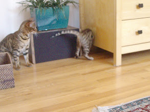 Photo: Roxanna: I thought I had him there, but he ducked under the TV armoire.