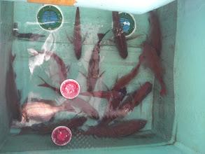 Photo: 結局、真鯛釣りの方は、イノウエさんトップ賞! 真鯛25匹!!
