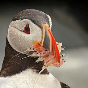 by Herb Houghton - Animals Birds ( fantastic wildlife )