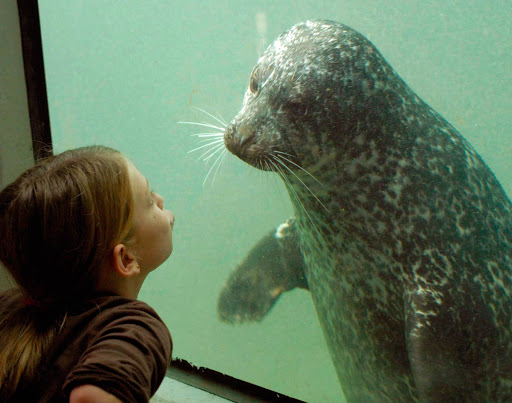 A girl and a seal have a stare-down in the Fundy Discovery Aquarium at the Huntsman Marine Science Centre in St. Andrews, Canada.