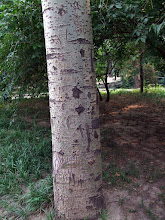 Photo: Chinese tree carvings, ZOO