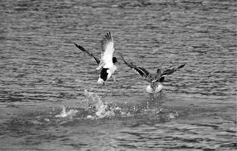 Volo sul lago di bepi1969