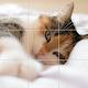 Tiny Photo Puzzle APK