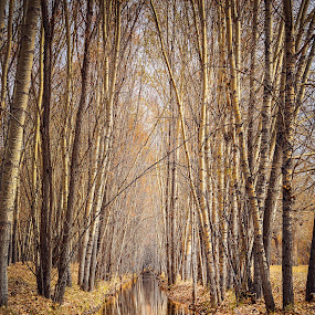 by Steel Hero - Landscapes Forests