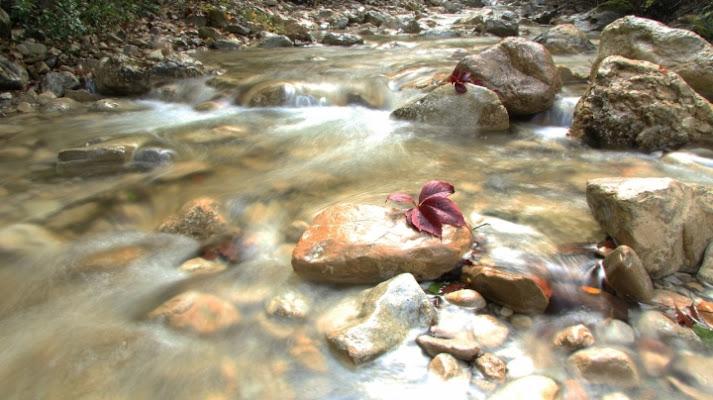 Il fiume e la foglia di simone fanni
