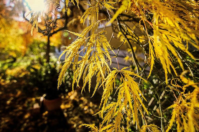 L'autunno è la primavera dell'inverno di LaMony