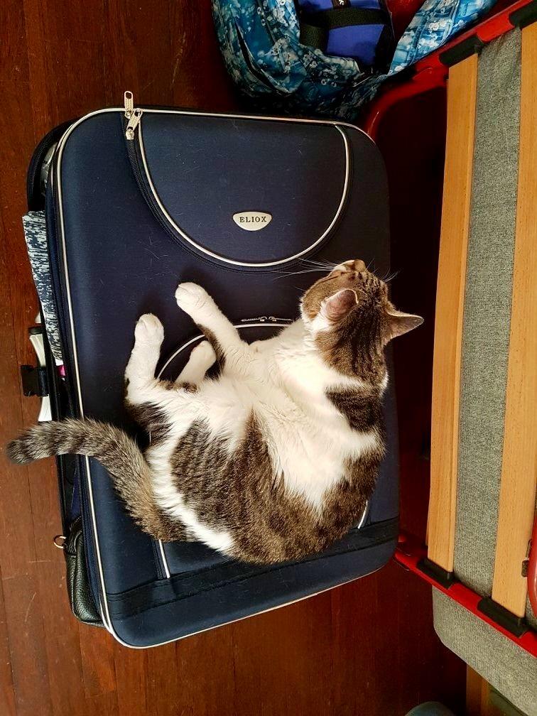 Viaggio col Gatto :) di Tom90cuc99dia08