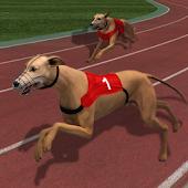 Sprint 100 Meter Dog Racing