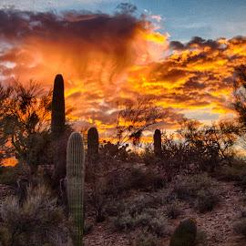 Sunrise over Tucson by Charlie Alolkoy - Landscapes Deserts ( sky, sunset, sunrise )