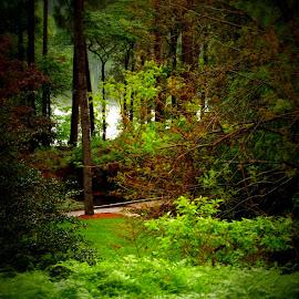 Forest and ferns by Brenda Shoemake - Landscapes Forests (  )