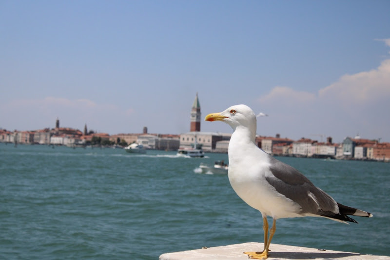 A big seagull in a small Venice di photos_enry