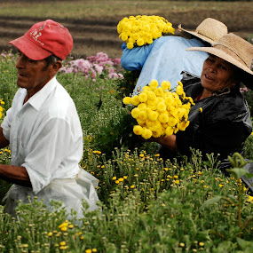 Family collector by Cristobal Garciaferro Rubio - People Family ( flowers field, collectors, family, flowers, flower, yellow flower )