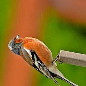 All Alone Sideways  by Lisa Rentz Lowe - Animals Birds (  )
