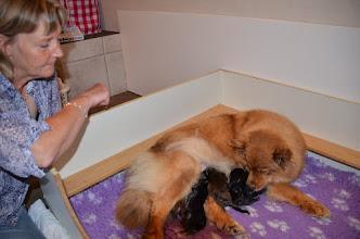 Photo: Birgith der har Jokka var med til de sidstes fødsel.