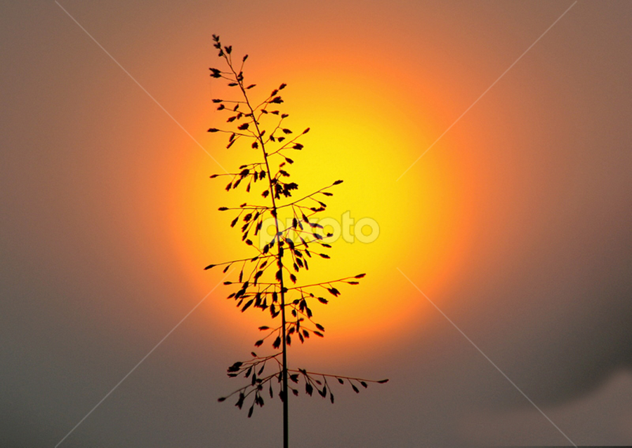 Silhouette by Ranjit Laxman - Landscapes Sunsets & Sunrises ( orange, red, silhouette, black, sun )
